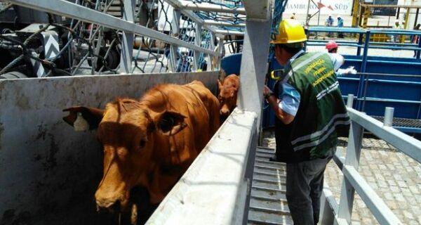 CNA entra com ação no STF contra a lei que proíbe o trânsito de cargas vivas em Santos