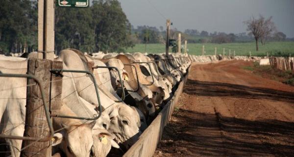 Mercado do boi gordo com viés de baixa