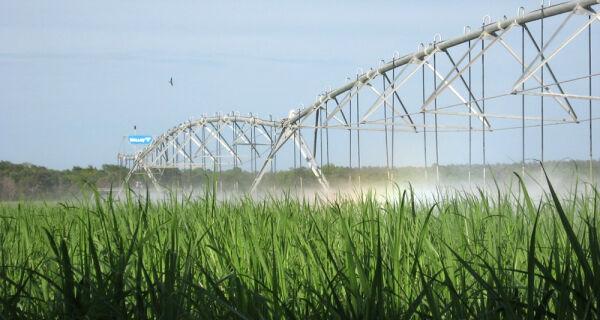 Mapa divulga zoneamento agrícola para cana-de-açúcar irrigada