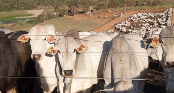 Preço do sebo bovino caiu 8,7% desde o começo do ano
