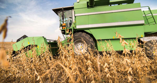Colheita da safra de soja atinge 95% da área, diz Datagro