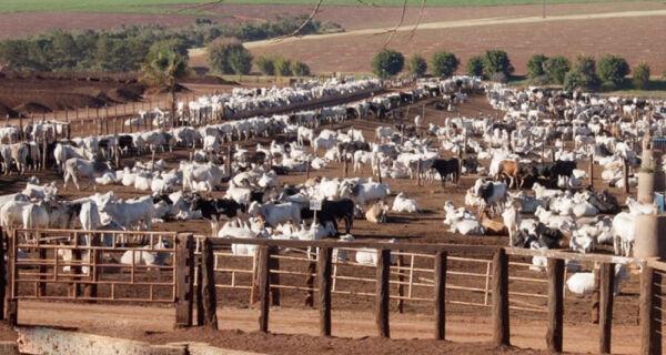 Caiu a cotação da carne bovina no mercado atacadista