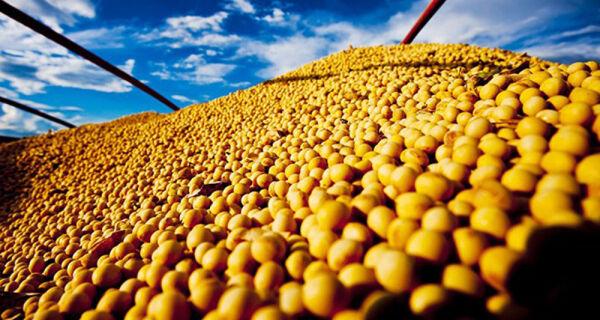 Nova previsão da Conab para a safra de grãos é de 232,6 milhões de toneladas