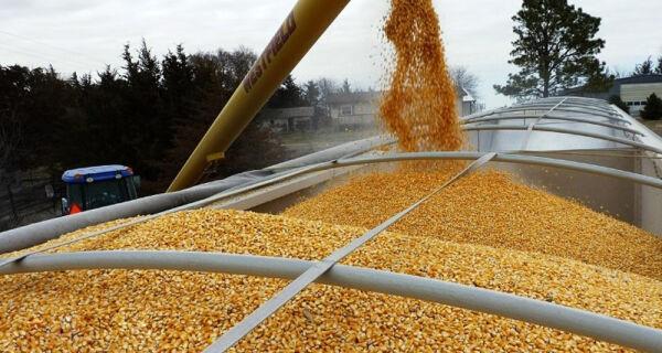 Preço de milho em alta no mercado interno de grãos