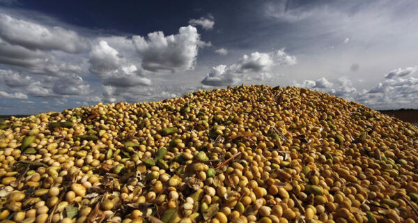 Brasil tem problemas que limitam sua capacidade de exportar soja