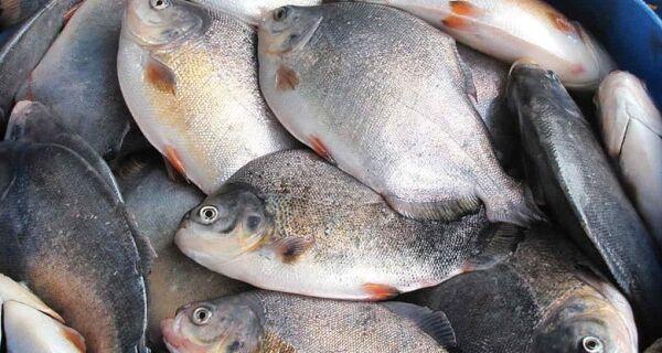 Depois do frango, europeus embargam importações de pescado do Brasil