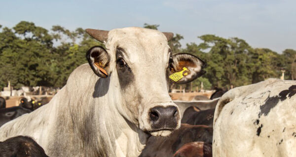 Pressão de baixa no mercado do couro em todo o País