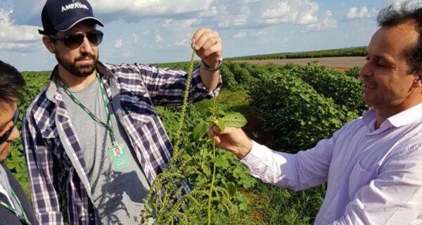 Equipe de MS discute ações de erradicação da Amaranthus palmeri em MT