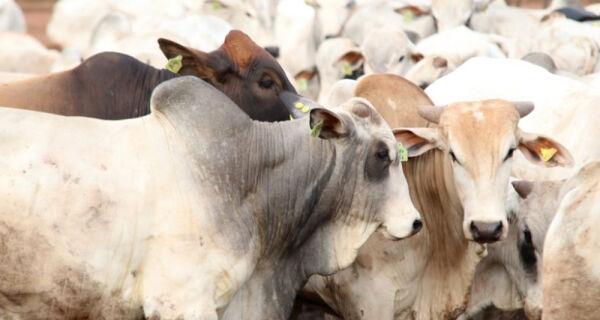 Pressão da baixa no mercado do boi gordo se dispersando