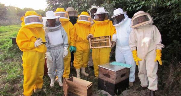 Amigos trocam pecuária por apicultura e fazem sucesso com confecção de roupa