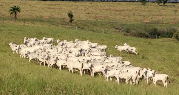 Sebo bovino está com os preços estáveis desde março