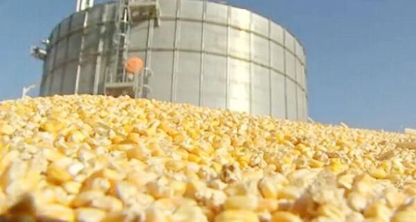 Conab vende 108 mil toneladas de milho para criadores de animais