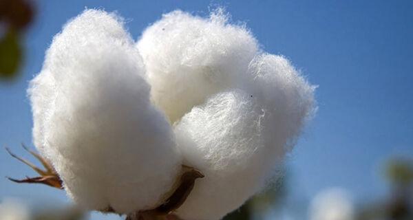Preço do farelo de algodão subiu no embalo do farelo de soja