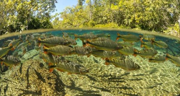 Aberta consulta pública para elaborar lista de espécies aquáticas exóticas