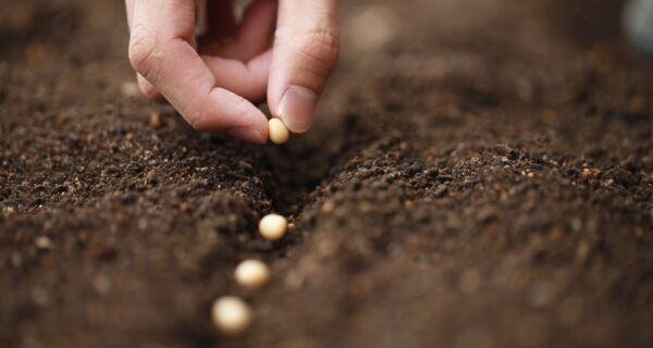 Empresa chinesa de sementes quer liderar mercado brasileiro em cinco anos