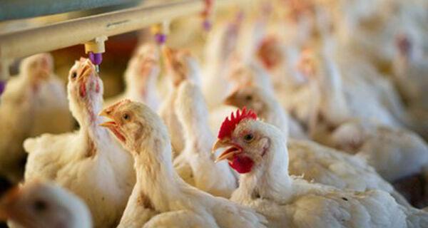 Indústria de aves e suínos estima perdas em R$ 3 bilhões com greve