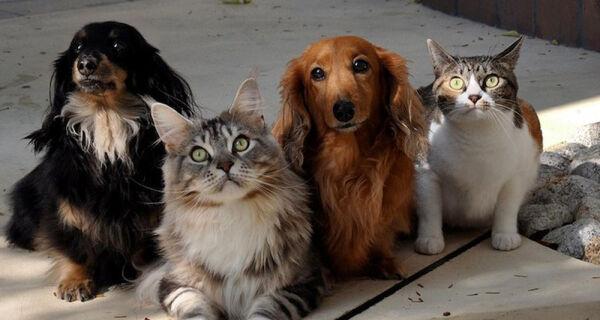 Certificado Veterinário para viagens com cães e gatos aos EUA passa a ser digital