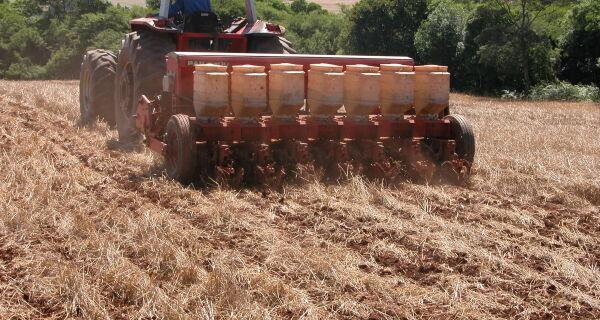 Seguir a recomendação para a época de semeadura pode reduzir perdas com o clima