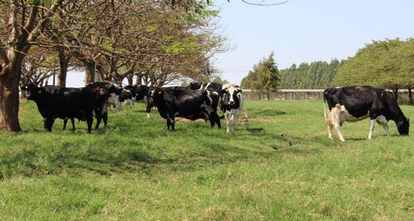 Embrapa capacita produtores e profissionais em produção orgânica de leite