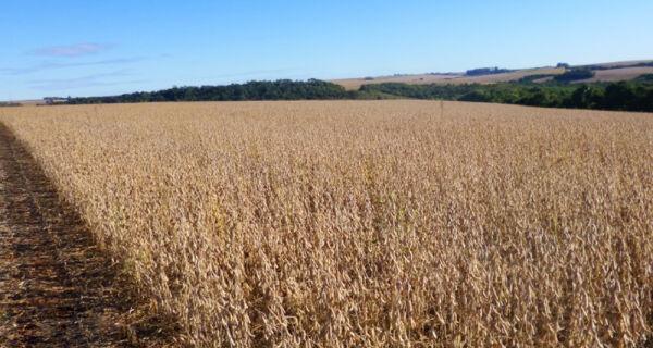 Exportações brasileiras de soja e farelo de soja aumentaram em maio