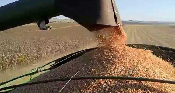 Clima deve ser favorável para colheita de milho safrinha
