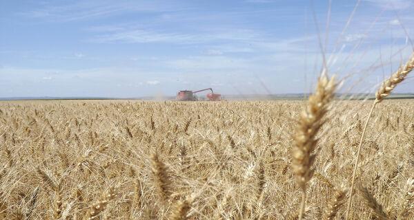 Dias de Campo apresentam cultivares de trigo no Cerrado