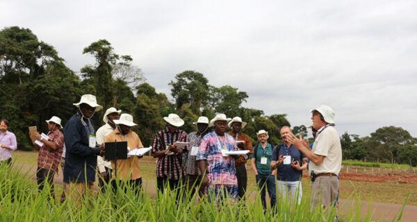 Experiência brasileira em pastagem contribui para produção de sementes na África