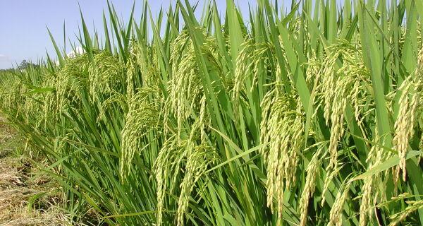 Governo reajusta preços mínimos das culturas de verão