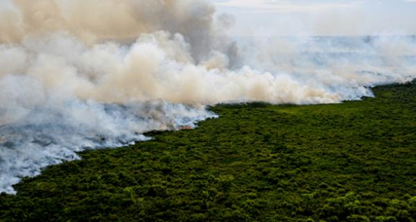 PF deflagra Operação Matáá no Pantanal de Mato Grosso do Sul