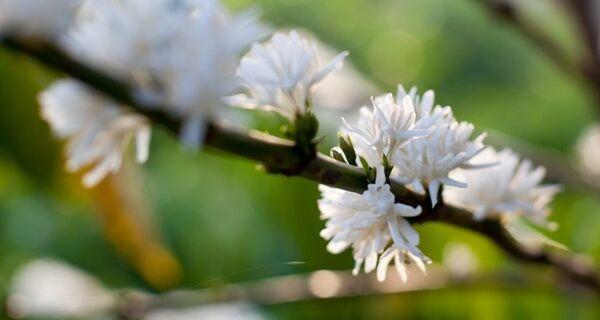 Primavera começa nesta terça-feira, com transição entre estações seca e chuvosa