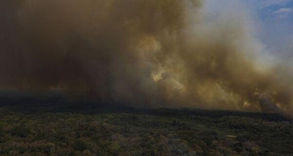 Fazendeiros têm prejuízo, mas defendem gado como 'bombeiro' do Pantanal