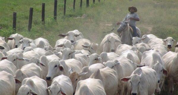 Rebanho bovino cresce no Brasil e alcança 214,7 milhões de animais