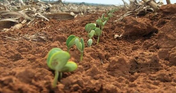 Agricultores de MS tem até 31 de dezembro para terminar plantio