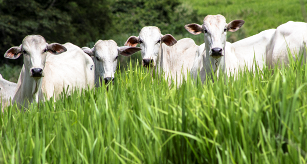 Aumento do investimento melhora a receita do produtor rural