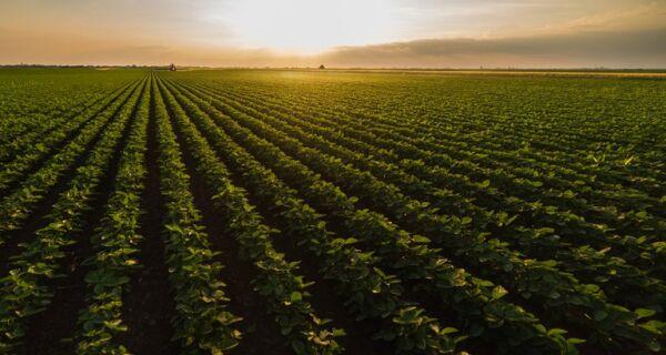Valor Bruto da Produção pode atingir R$ 1 trilhão até o fim deste ano