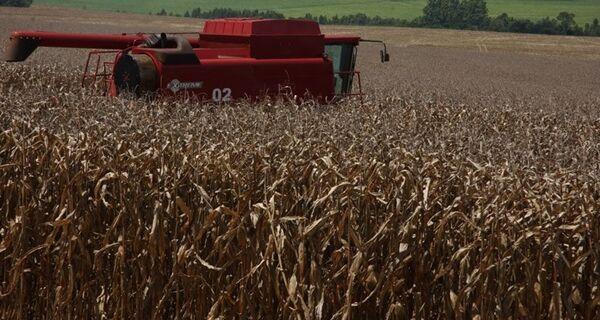 Previsão de clima seco liga alerta no campo para reta final da segunda safra de milho