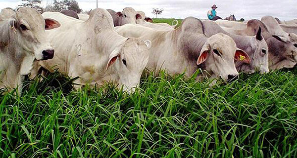 Reforma de pastagens pode trazer ganhos ambientais e maior produtividade na pecuária