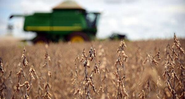 Preço médio da saca de soja em Mato Grosso do Sul tem valorização de 60%