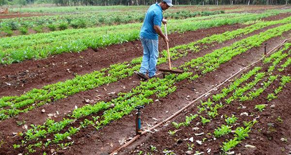 Governo estrutura cadeia produtiva e beneficia 70 mil famílias de pequenos agricultores