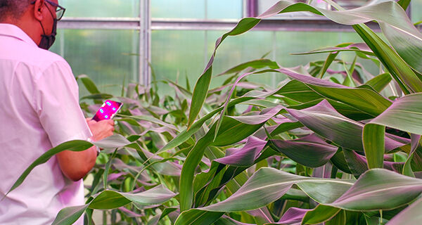 Agricultura digital aponta caminhos para transformação de sistemas agroalimentares