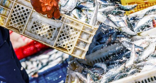 Mapa atualiza critérios para habilitar embarcações pesqueiras que vão exporta à União Europeia