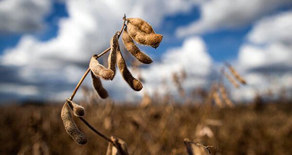 USDA aumenta projeção global da safra de milho e soja