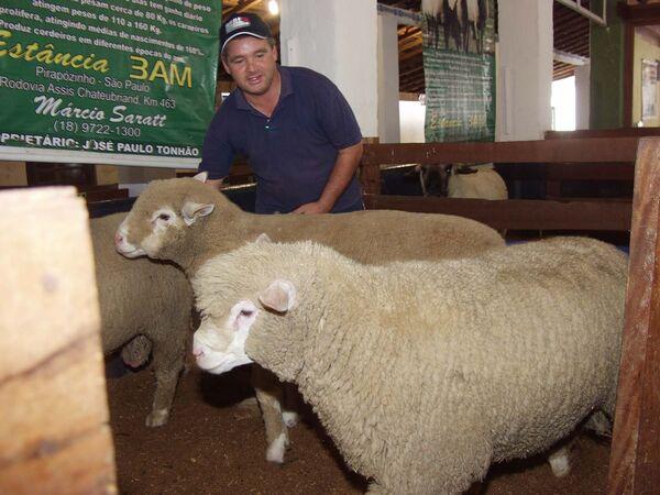 Venda de ovinos na Expo MS chega a 70% dos animais expostos