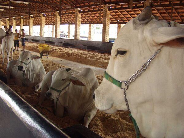 Animais começam a chegar para a Expogrande 2010
