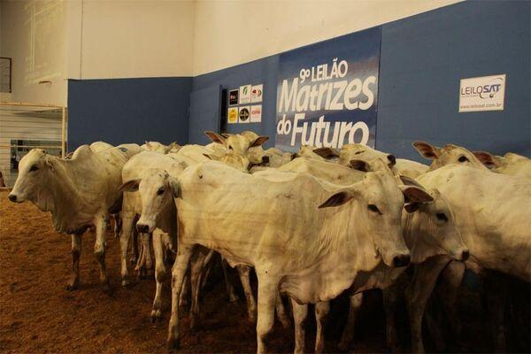 9º Leilão Matrizes do Futuro atrai diversos criadores à Expogrande 2010
