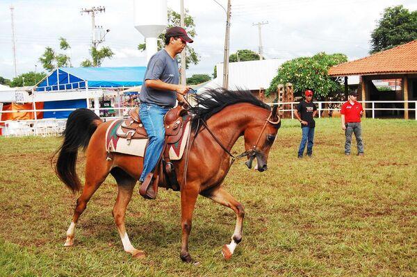 Cavalos Árabes se apresentam na Expogrande entre os dias 24 e 29 de março