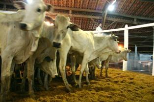 Shows e leilões marcam feira agropecuária que inicia em Corumbá