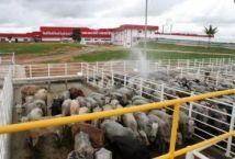 Pecuaristas se mobilizam para receber R$ 95 milhões do Frialto