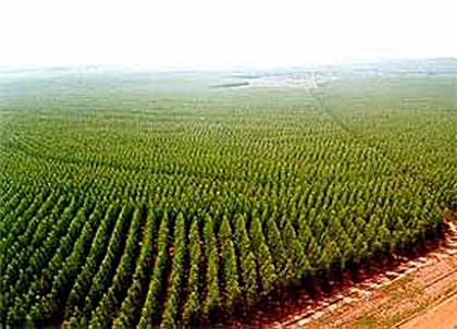 Crescem exportações de celulose em Mato Grosso do Sul